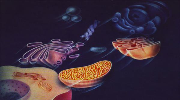 i nutri e la cellula